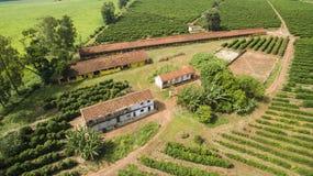 Piccoli polli dell'azienda agricola e caffè all'interno del Brasile Fotografie Stock