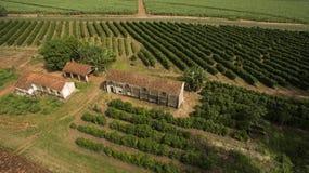 Piccoli polli dell'azienda agricola e caffè all'interno del Brasile Fotografie Stock Libere da Diritti