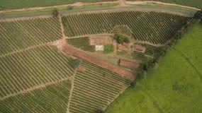 Piccoli polli dell'azienda agricola e caffè all'interno del Brasile Immagini Stock