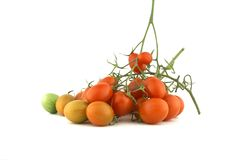 Piccoli pomodori. Fotografia Stock