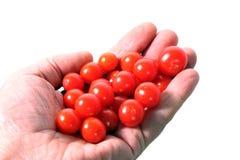 Piccoli pomodori fotografia stock libera da diritti