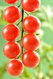 Piccoli pomodori ciliegia Fotografie Stock