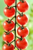 Piccoli pomodori ciliegia Immagine Stock Libera da Diritti