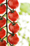 Piccoli pomodori ciliegia Fotografia Stock Libera da Diritti