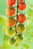 Piccoli pomodori ciliegia Fotografie Stock Libere da Diritti