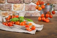 Piccoli pomodori di ciliegia rossi Immagine Stock Libera da Diritti