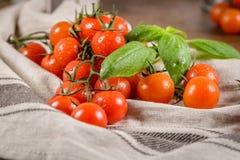 Piccoli pomodori di ciliegia rossi Immagini Stock