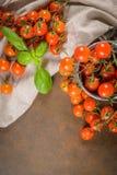 Piccoli pomodori di ciliegia rossi Immagini Stock Libere da Diritti