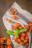Piccoli pomodori di ciliegia rossi Fotografia Stock