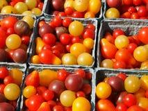 Piccoli pomodori di Heirloom immagine stock