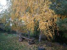 Piccoli punti dell'autunno immagine stock libera da diritti