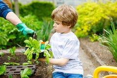 Piccoli ragazzo sveglio e madre prescolari del bambino che piantano insalata verde in primavera Immagine Stock