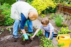 Piccoli ragazzo sveglio e nonna prescolari del bambino che piantano insalata verde in primavera Fotografie Stock Libere da Diritti