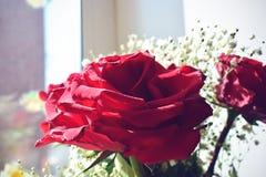 Piccoli rouse-fiori dolci Immagine Stock