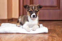 Piccoli sguardi del cucciolo immagine stock libera da diritti