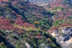 Piccoli Three Gorges alberi di Yangtze nella caduta Immagini Stock
