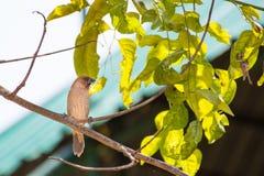 Piccoli uccelli che si siedono su un ramo di albero immagine stock