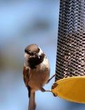 Piccoli uccelli su un alimentatore immagini stock libere da diritti
