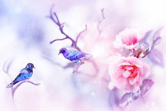 Piccoli uccelli variopinti fantastici e belle rose rosa nella neve e nel gelo su un fondo blu e rosa nevicare fotografia stock