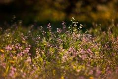 Piccoli wildflowers rosa fotografie stock libere da diritti