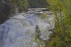 Piccolo abete rosso sopra una grande cascata Fotografie Stock