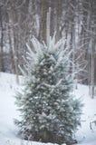 Piccolo albero Fotografie Stock