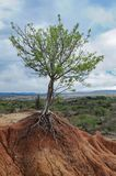 Piccolo albero che cresce su una piccola montagna Fotografie Stock Libere da Diritti
