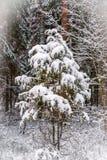 Piccolo albero che dorme sotto la neve bianca nella foresta Fotografia Stock