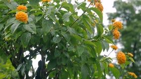 Piccolo albero con i fiori gialli su  stock footage