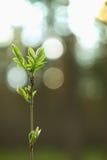 Piccolo albero contro il sole Fotografie Stock Libere da Diritti