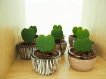 Piccolo albero del cactus Fotografia Stock