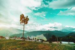 Piccolo albero del mapple e paesaggio sbalorditivo di autunno Fotografia Stock
