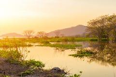 Piccolo albero del paesaggio svilupparsi nello stagno e nel tramonto con la montagna indietro immagini stock
