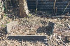 Piccolo albero dentro contenuto all'interno di calcestruzzo fotografia stock libera da diritti