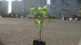 Piccolo albero nell'ambiente urbano archivi video