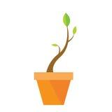 Piccolo albero, progettazione della natura Fotografia Stock