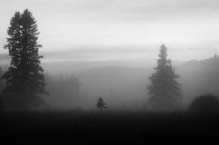 Piccolo albero solo nella nebbia fotografia stock