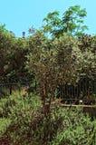 Piccolo albero in un giardino pubblico fotografia stock
