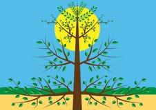 Piccolo albero verde con il sole Fotografia Stock