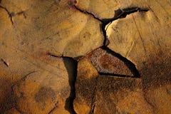 Piccolo albero verde Primo piano Fotografie Stock Libere da Diritti