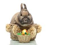 Piccolo allevamento sveglio del coniglietto di pasqua nel cestino Immagine Stock Libera da Diritti
