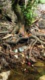 Piccolo altare religioso con le candele brucianti alla foresta pluviale tropicale Fotografia Stock Libera da Diritti