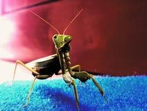 Piccolo animale Fotografie Stock Libere da Diritti