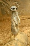 Piccolo animale divertente Fotografia Stock