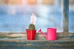 Piccolo annaffiatoio rosa e cactus di fioritura sulla vecchia finestra Fotografie Stock Libere da Diritti