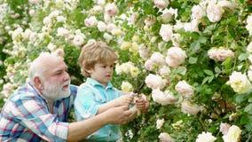 Piccolo assistente in giardino Nonno felice con il suo nipote che lavora nel giardino Amo i nostri momenti in video d archivio