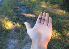 Piccolo atterraggio della libellula sulla mia mano immagine stock