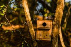 Piccolo aviario di legno alloggiato fra due alberi Immagine Stock Libera da Diritti
