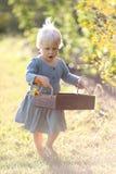 Piccolo bambino del bambino che cammina attraverso i fiori di raccolto del giardino immagini stock libere da diritti