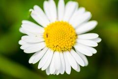 Piccolo bello fiore su fondo verde Fotografia Stock